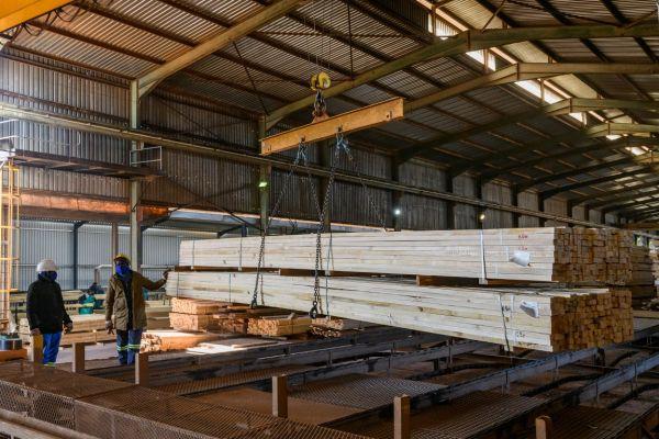 uclsawmill-july2020-1128B81885B4-BF14-AC5E-DDD3-A5BED71A2B99.jpg