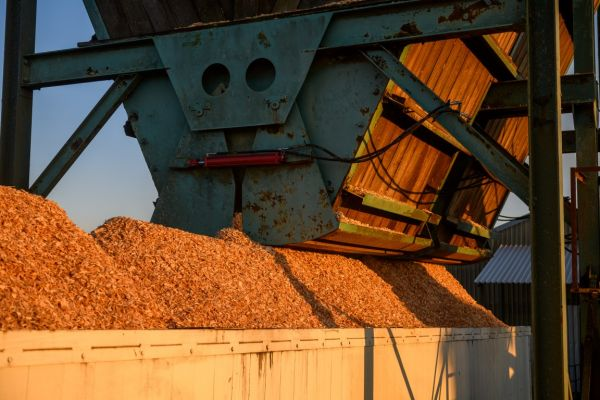 uclsawmill-july2020-021-mediumC9C09D86-979A-CB83-B14B-B02A984CB43B.jpg